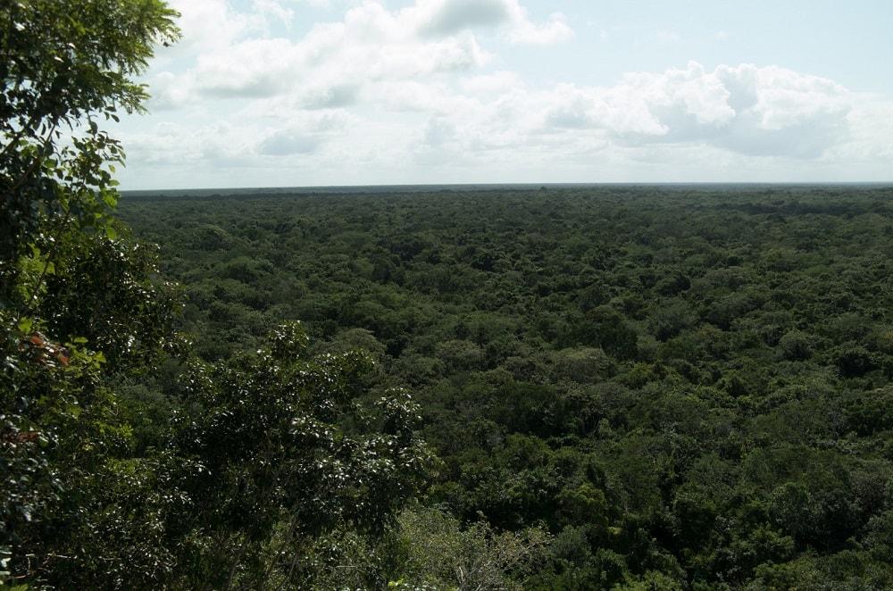 Mexikanischer-Dschungel