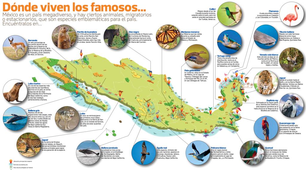 Tiere in Mexiko