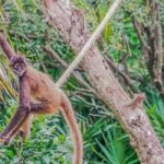 Go see the monkeys: Dschungelausflug ins Punta Laguna Nature Reserve